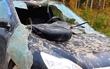 Ford Focus после нападения медведя