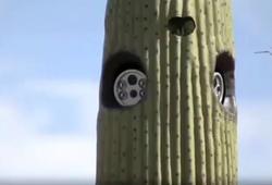 камеры видеонаблюдения в кактусах